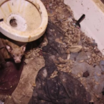 They Walked Into A Seemingly Normal Home, But The Condition They Saw It In? Horrible.
