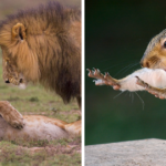 20+ Funniest Wildlife Photos Of 2018 Have Been Announced, And They Will Attain Your Day