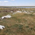 More Than 11,000 Birds Fall Dead From Montana Sky