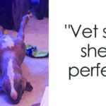 Meet Leela, The Weirdest Pit Bull In The World Who Acts So Strangely Even Vet Can't Explain It