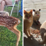 22 Adorable Photos From The Twitter Page # PossumEveryHour That May Make You See These Creatures Differently