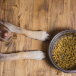 Low-Protein Dog Foods Linked To Devastating Canine Heart Disease